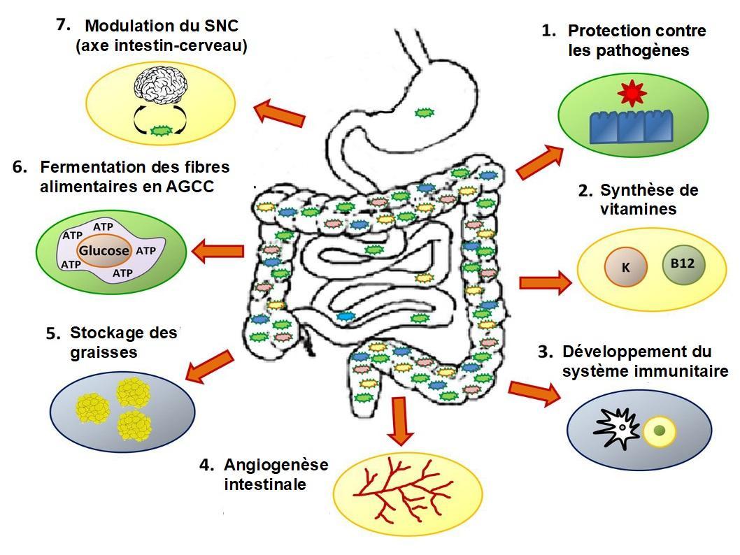 Analyse microbiote 2