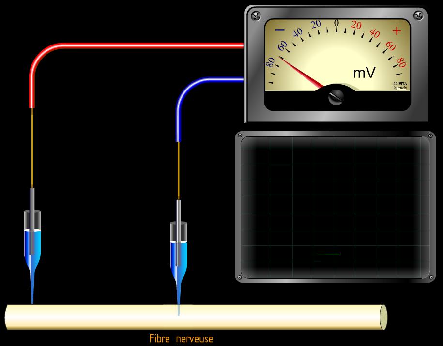 Polarisationmembrane